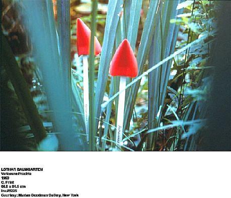 Lothar Baumgarten, Verlorene Früchte (Lost Fruits) 1969, C -print